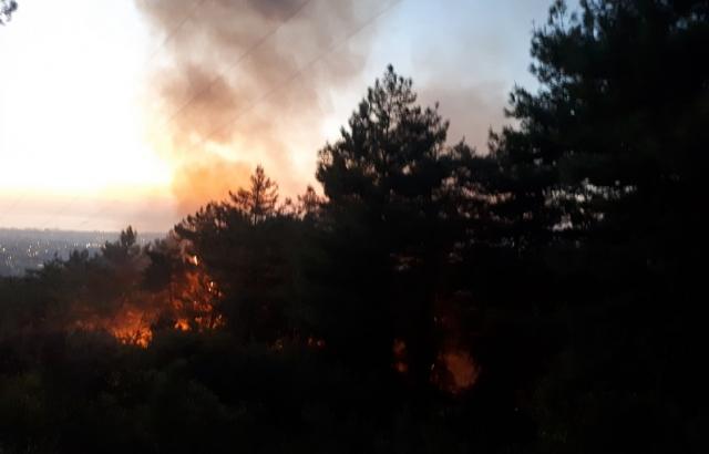 1 hektar alan yandı