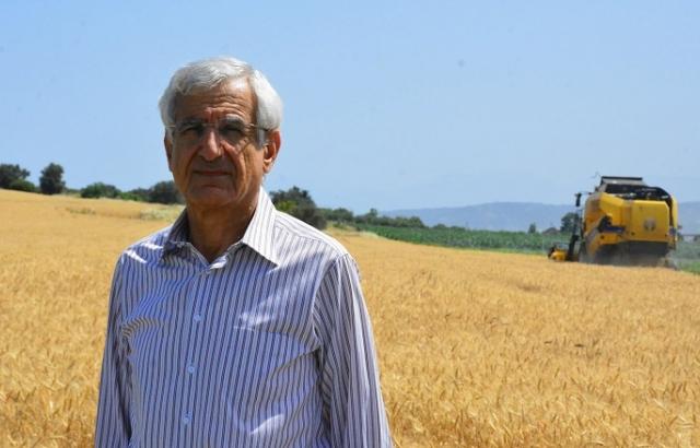 Arsuz'da 2 bin yıllık Ata Tohumu buğday verdi