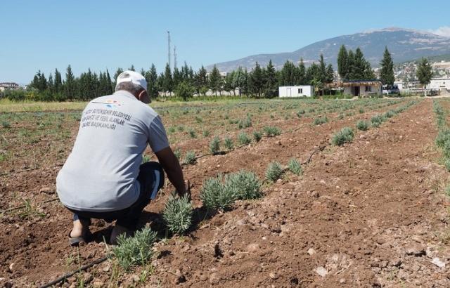 Hatay'ın Tarım Ürünleri Değer Kazanıyor