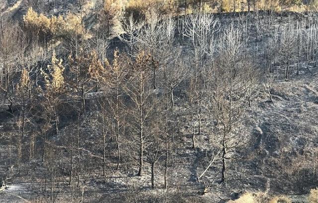 Orman yangınında soğutma çalışmaları tamamlandı