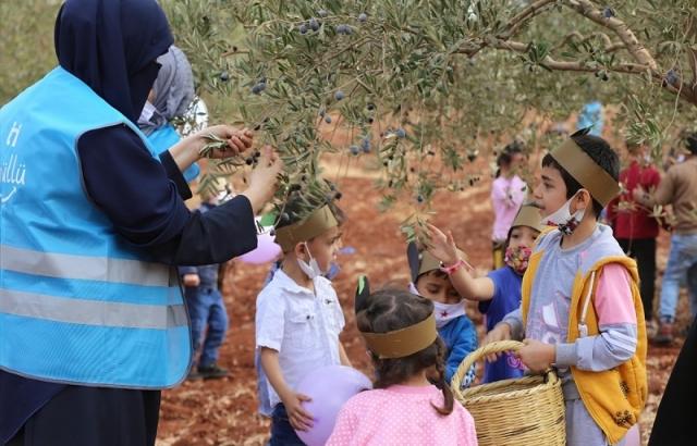 Suriyeli yetimler zeytin toplama şenliğine katıldı