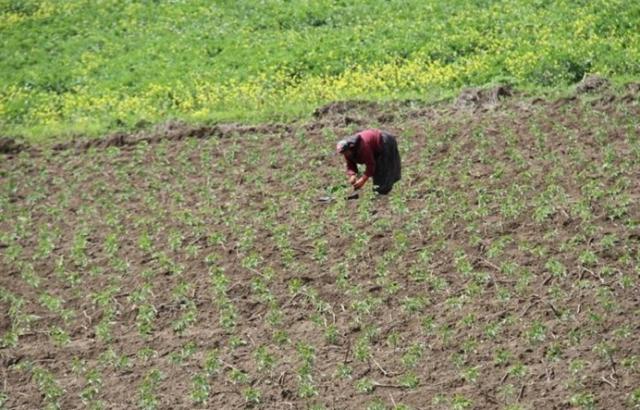 Tarımsal faaliyetler kesintisiz sürüyor