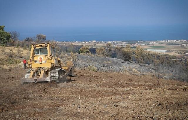 Yanan alanlar fidan dikimine hazırlanıyor