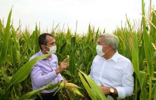 Amik Ovası'nda mısıra ürün desteği sağlandı