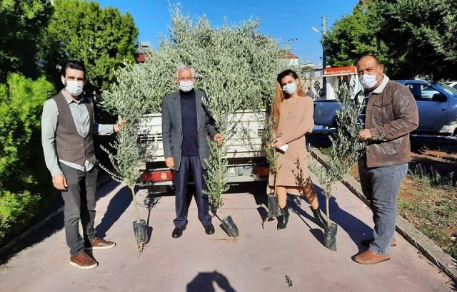 Arsuz'da Vatandaşlara Zeytin Fidesi Dağıtılıyor