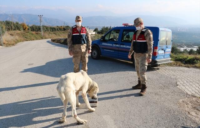 Jandarma sokak hayvanları için belirli noktalara yem bıraktı