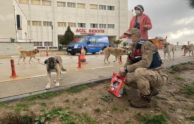 Jandarma ve hayvan severlerden sokak hayvanlarına yiyecek desteği