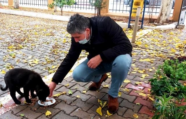 Kırıkhan'da Sokak Hayvanlarına Sahip Çıkıyorlar