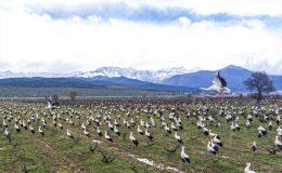 Amanos Dağı eteklerinde görsel şölen