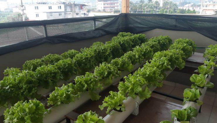 Öğrencilerden topraksız tarım projesi