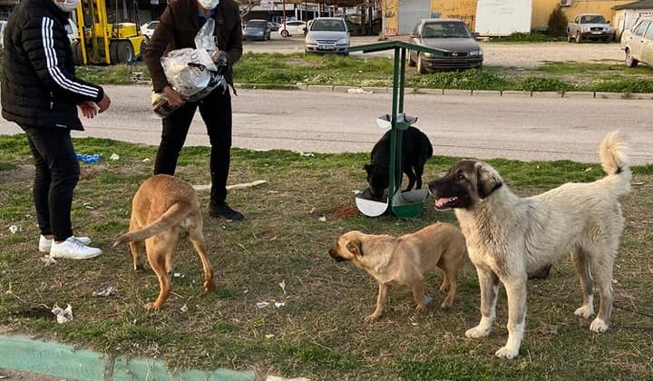 Sokak Hayvanlarına Sahip Çıkılıyor