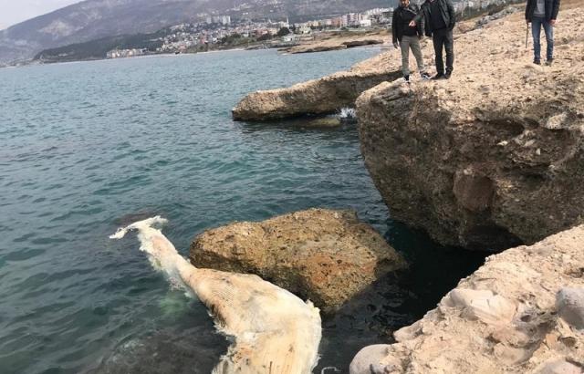 Ölü balina, Deniz Müzesi'nde sergilenecek