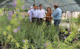 Ayda 20 bin süs bitkisi seralarda yetişiyor