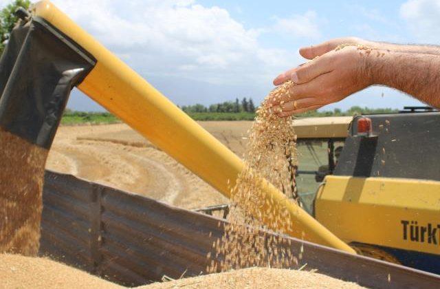 Dörtyol'da buğday hasadı sürüyor
