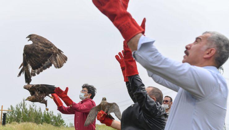 Tedavileri tamamlanan yırtıcı kuşlar doğaya salındı