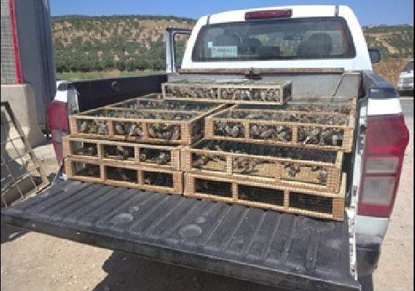 3 bin 754 saka kuşu doğaya bırakıldı