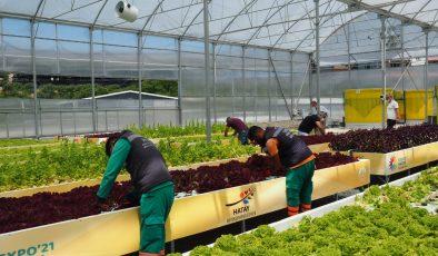 Topraksız tarımın ilk mahsulleri sosyal marketlerde