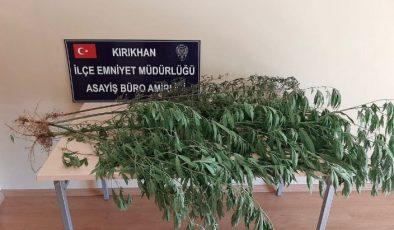 Kırıkhan'da kenevir ele geçirildi